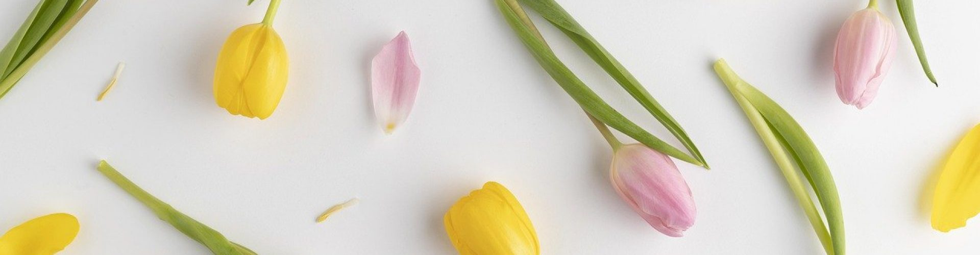 background, tulips, mother's day